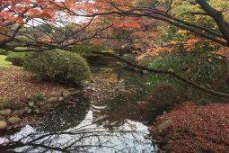 Tokyo, autumn pond