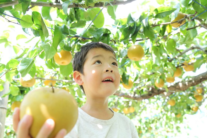 Japan's Fruitful Autumn