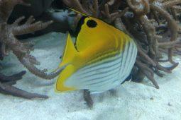 Tokyo Aquarium. Yellow fish