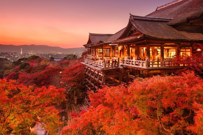 Autumn Leaf Illuminations in Kyoto
