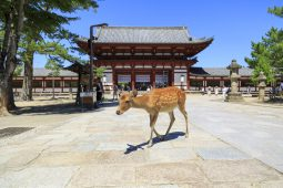 Nara: City of Temples Part1