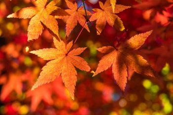 Autumn Leaves and You photo