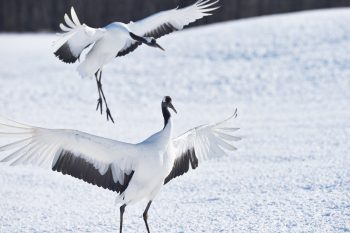 Photo for Hokkaido fauna