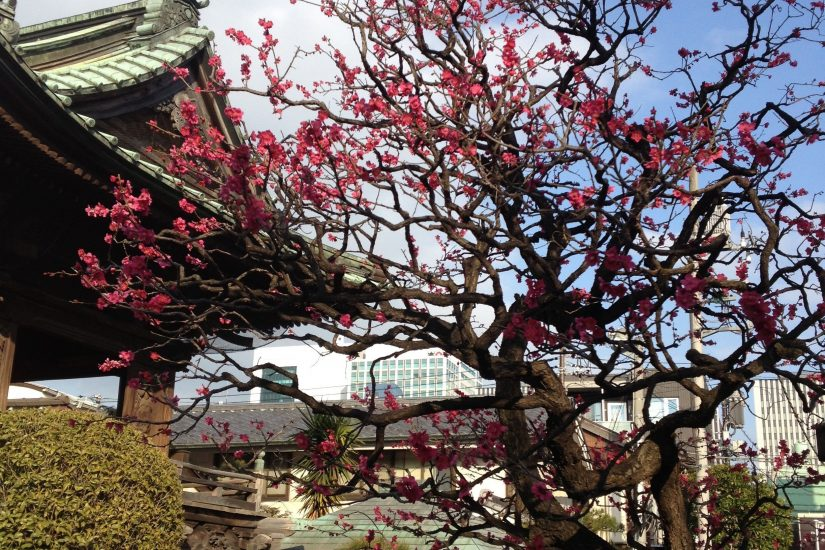 Japanese spring, Shinagawa, Tokyo photo