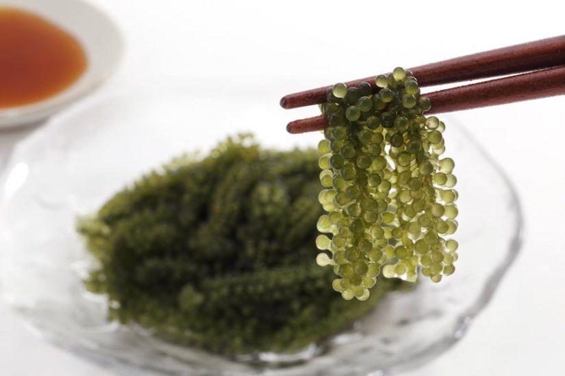 Seaweed, the superfood of Japan image