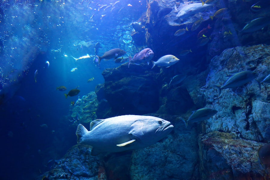 Photo from Umitamago aquarium, Oita