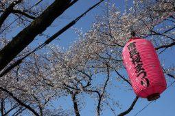 Festival in Saitama lantern photo