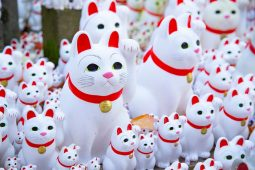 Lucky beckoning cats